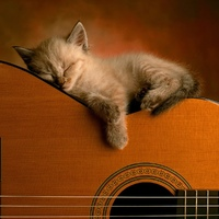Cat_sleeping_in_guitar_10308_1600_1200.jpg