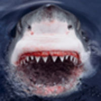Great White pix.jpg