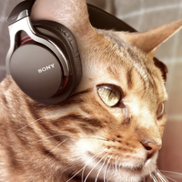 sony-cat-headphones2.png