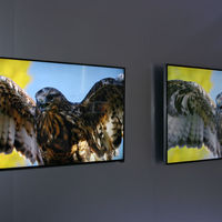 Vizio's P-series UHDTVs looked really good