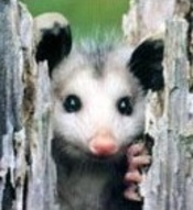 Possumgirl profile picture
