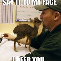 say-it-to-my-face-I-deer-you - Copy.jpg